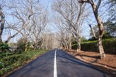 stock photo of tar  - Scenic residential road lined with trees with new asphalt tarred surface and white line - JPG