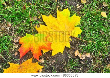 Fallen Autumn Leaves On The Ground.