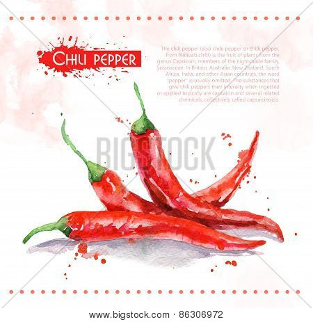 Chili pepper. Raw vegetable.
