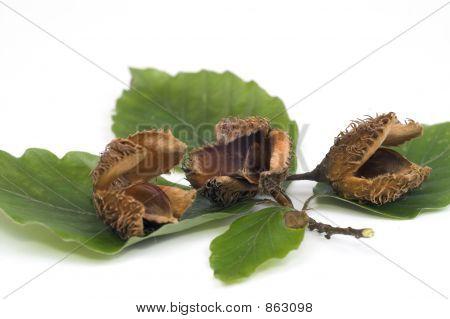 Beechnuts