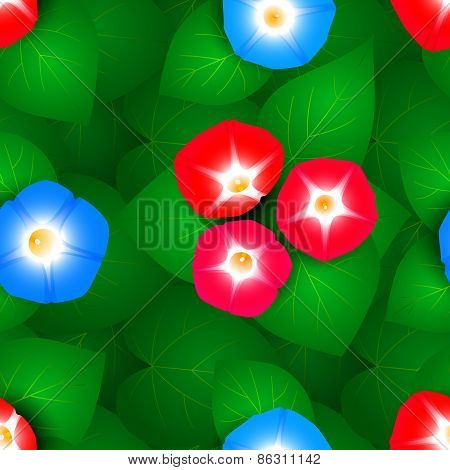 Seamless pattern with ipomoea flowers