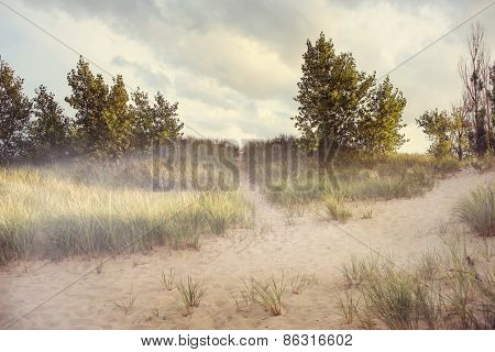 Dreamy beach path with morning fog. Some motion blur on grasses