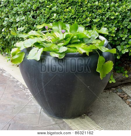 Green Tree In Pot