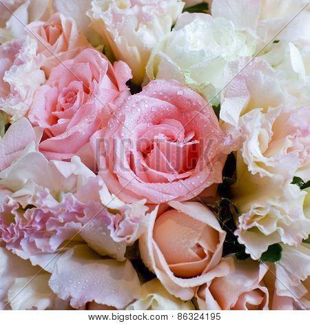 Close Up On Rose