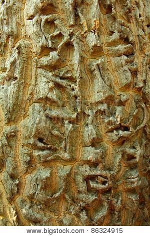 Horseradish Bark