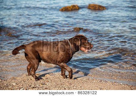 Good Looking Dog On The Beach