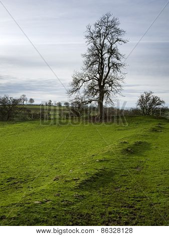 Tree, Cumbria, England