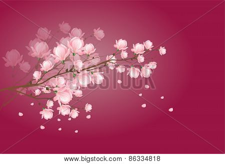 Light Pink Magnolia Blossom On Dark Pink Background