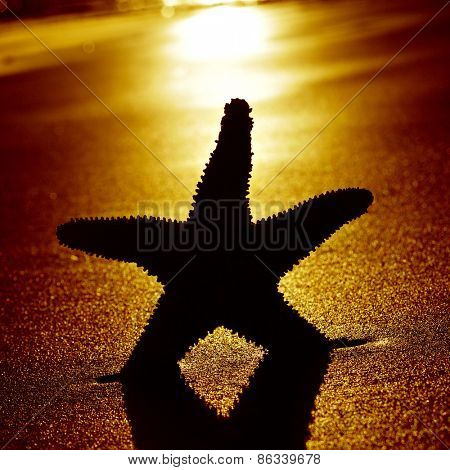 the silhouette of a seastar with backlight on the shore of a beach at sunset