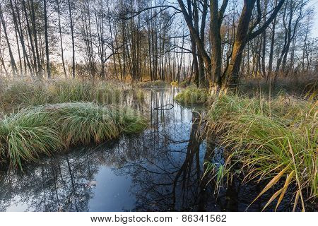 Morning Wetlands