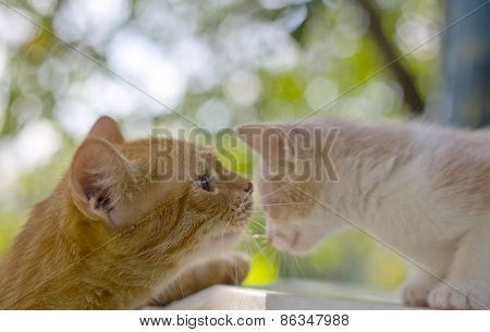 portrait of  cat and a kitten