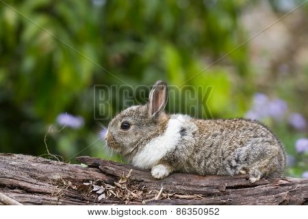 cute baby rabbit walking on a log