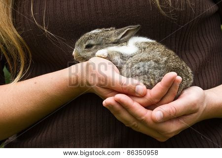 Baby Rabbit In Lady's Hands