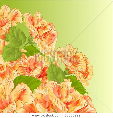 Flowering Shrub Yellow Hibiscus Vector