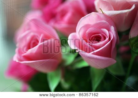 Beautiful pink roses close up