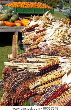 Dried Indian Corn On Display On A Farm