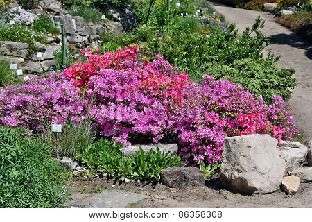 Beautiful Garden In The Park Sanssouci