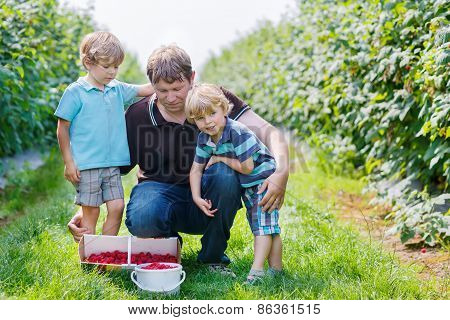 Two Little Twins Kid Boys And Their Dad On Organic Raspberry Farm