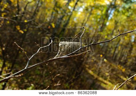 Cobweb On A Branch