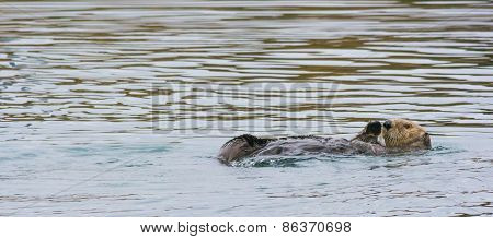 Waving Otter