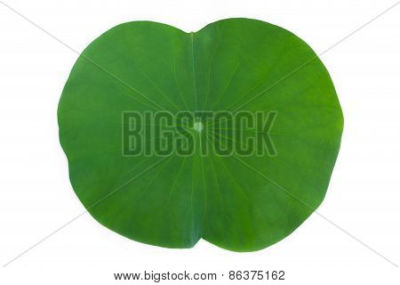 Lotus Leaf Isolate On White Background