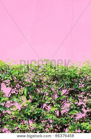 Fresh Bush Fence