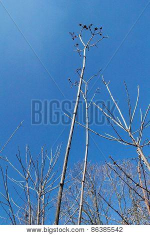 Blue Sky Tall Plants