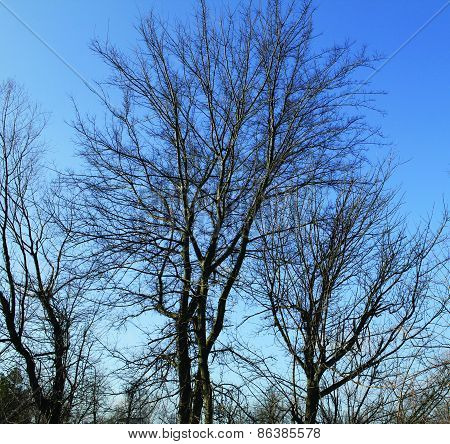 Blue Sky with Trees