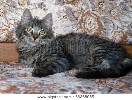Striped Fluffy Siberian Kitten Lying On Couch