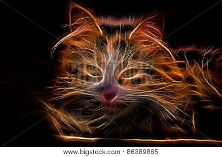 Electric Effect Glowing Cat