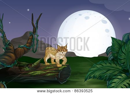 Lynx in the forest with full moon