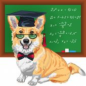 stock photo of corgi  - Vector graduated dog Pembroke Welsh corgi breed in glasses and bow tie - JPG
