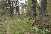 pic of driveway  - Flowers on a driveway up to a building - JPG