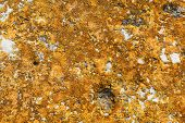 picture of lichenes  - Moss lichen on the rocks orange sandstone - JPG
