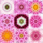 stock photo of kaleidoscope  - Collection of Nine Pink Concentric Flower Mandalas - JPG