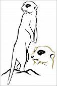 stock photo of meerkats  - Vector illustration  - JPG