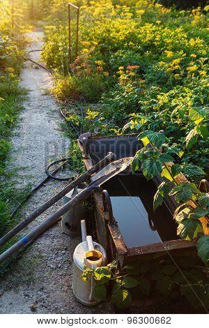 Sunset Sunbeams And Green Vegetable Garden