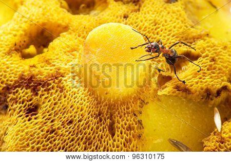 An Ant Crawling On A Mushroom