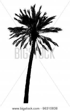 Silhouette Of Palm Tree Realistic Vector Illustration