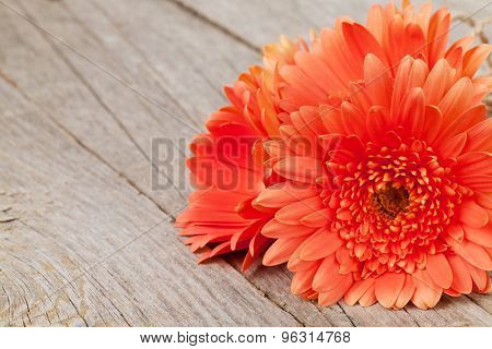 Orange gerbera flowers on wooden background with copy space