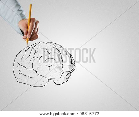Close up of male hand drawing human brain