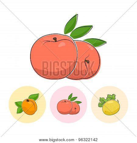 Fruit Icons, Peach, Apricot,  Melon