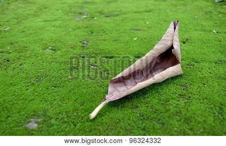 floor with green moss and dry old leaf