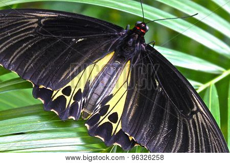 The Largest Butterfly In The World