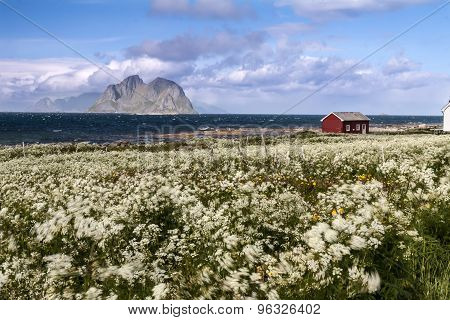 Scenic beach on Lofoten islands