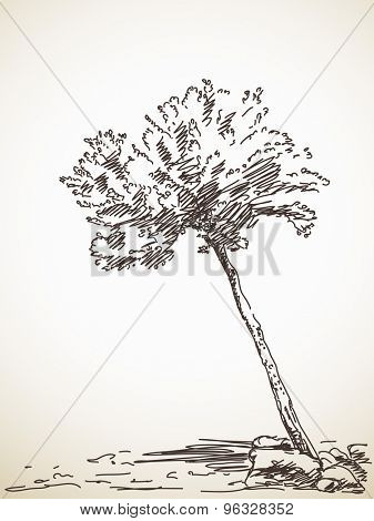 Olive tree. Vector sketch, Hand drawn illustration