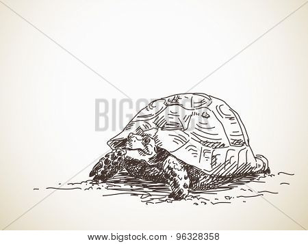 Sketch of turtle. Vector sketch, Hand drawn illustration