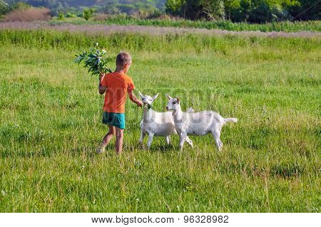 Boy treats young goats sprig of willow.