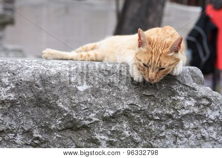Cat On Marble