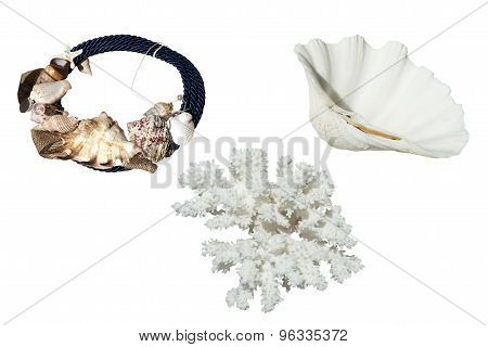 Coral And Jewelry And Shell